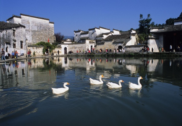 Geese.are.Swiming.in.the.Pond.in.Hongcun.Village