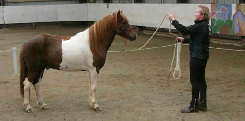 Gunnar Reynisson (sonur Aðalsteins) með skjóttan hest